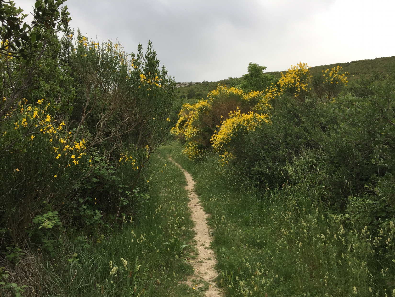 sentier dans les Alpilles